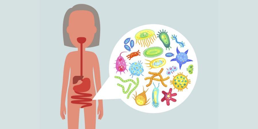 Come il cibo influenza il Sistema Immunitario